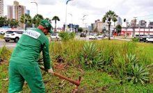 Prefeitura realiza serviços de manutenção paisagística em novas áreas da cidade